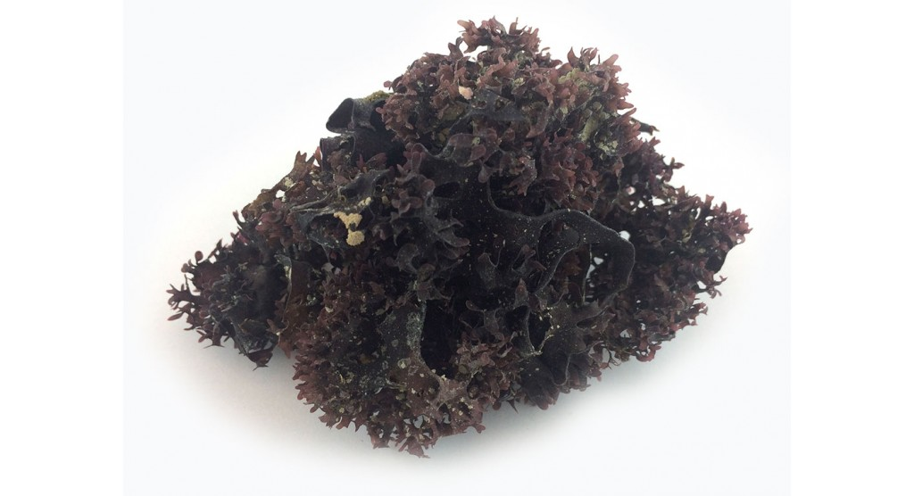 Irish Moss, Dark, 2 oz.